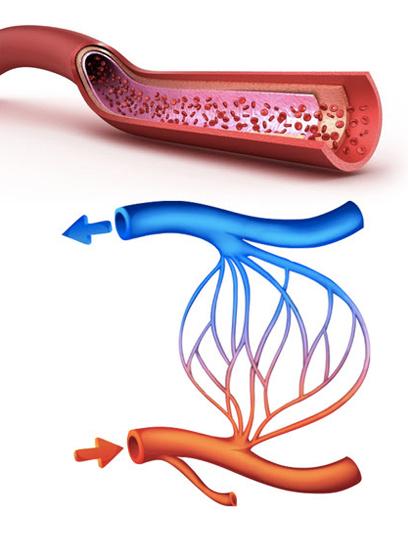 dilatazione-vascolare-pene